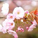 【4/17(日)開催!】 エミール先生と行く 春のテクテク散歩【無料イベント】