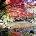 【無料イベント・12/3(土)開催!】 エミール先生と行く テクテク散歩in小石川植物園